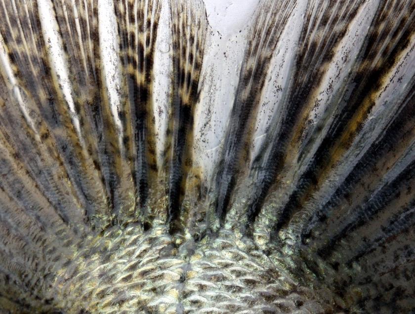 Sandre mâle 73cm -Coiselet- 2-12-2012 B.cottet9